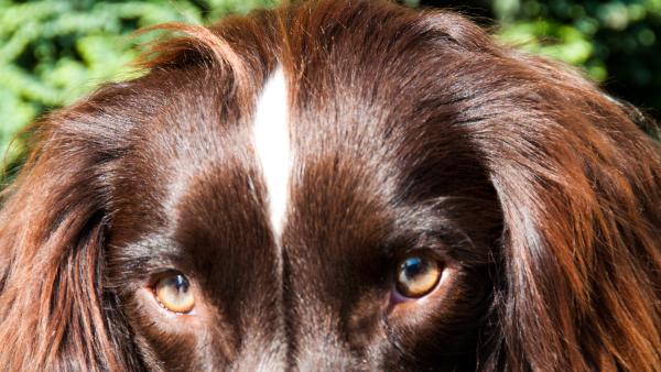 dog-kaspa-daniella-6