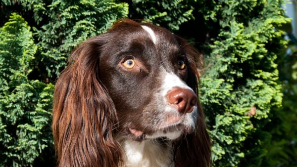 "<p style=""text-align: left;""><a href=""http://www.brackenbury-village.co.uk/wp-content/uploads/brackenbury-dog-kaspa-daniella.png""><img class=""alignnone size-full wp-image-2781"" src=""http://www.brackenbury-village.co.uk/wp-content/uploads/brackenbury-dog-kaspa-daniella.png"" alt=""Kaspa - Brackenbury Dog"" width=""600"" height=""338"" /></a> Kaspar looks for inspiration. A Brackenbury Village dog: friendly, well-behaved, loyal. <a href=""http://www.brackenbury-village.co.uk/wp-content/uploads/brackenbury-dog-kaspa-daniella-set-14.png""><img class=""alignnone size-full wp-image-2770"" src=""http://www.brackenbury-village.co.uk/wp-content/uploads/brackenbury-dog-kaspa-daniella-set-14.png"" alt=""Kaspa - Brackenbury Dog"" width=""600"" height=""338"" /></a> <a href=""http://www.brackenbury-village.co.uk/wp-content/uploads/brackenbury-dog-kaspa-daniella-6.png""><img class=""alignnone size-full wp-image-2780"" src=""http://www.brackenbury-village.co.uk/wp-content/uploads/brackenbury-dog-kaspa-daniella-6.png"" alt=""Kaspa - Brackenbury Dog"" width=""600"" height=""338"" /></a> Thanks Kaspar.</p>"